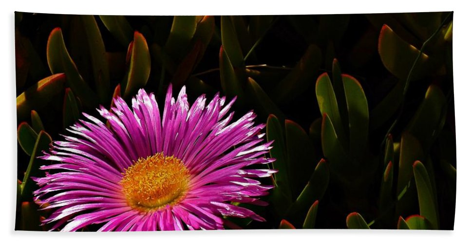 Hottentot Fig Marigold Beach Towel featuring the photograph Loving The Sun by Clare Bevan