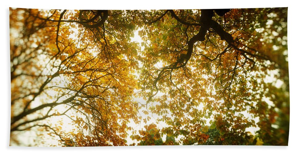 Photography Beach Towel featuring the photograph Low Angle View Of Autumn Trees by Panoramic Images