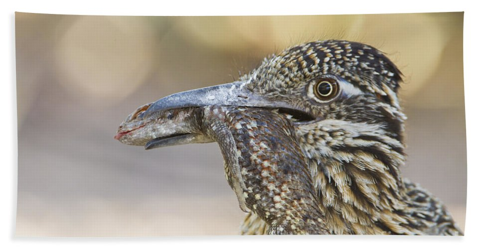 Roadrunner Beach Towel featuring the photograph Lunch Time by Bryan Keil