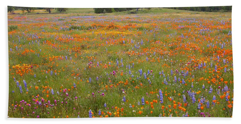 Wildflowers Beach Towel featuring the photograph Luscious Spring Wildflowers by Lynn Bauer