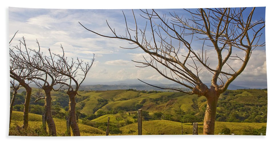 Landscape Beach Towel featuring the photograph Lush Land Leafless Trees 2 by Madeline Ellis