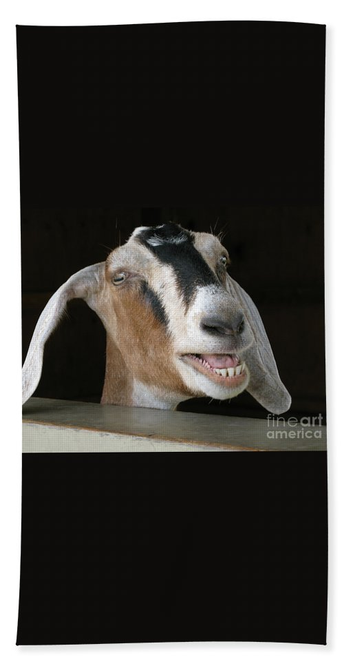 Goat Beach Towel featuring the photograph Maa-aaa by Ann Horn