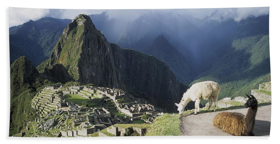 Machu Picchu Beach Towel featuring the photograph Machu Picchu And Llamas by James Brunker