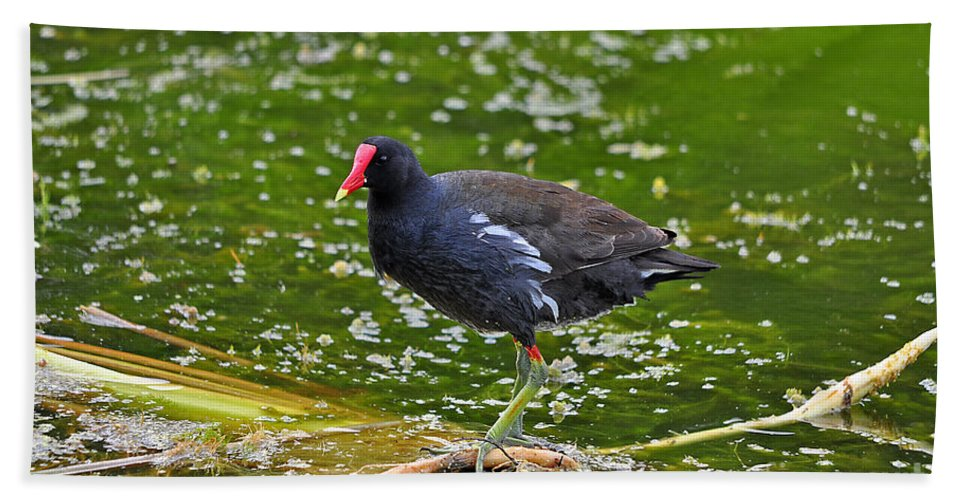 Moorhen Beach Towel featuring the photograph Majestic Moorhen by Al Powell Photography USA