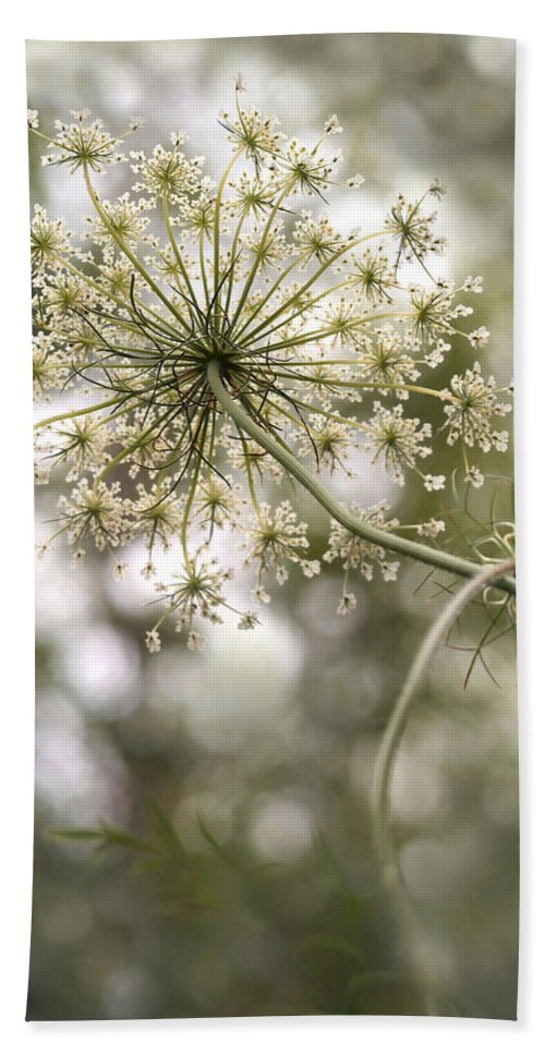 Queen Anne's Lace Beach Towel featuring the photograph Majestic Queen - Queen Anne's Lace Daucus Carota by Angie Rea