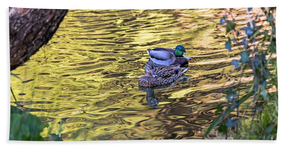 Anas Platyrhynchos Beach Towel featuring the photograph Mallard Pair by Kate Brown