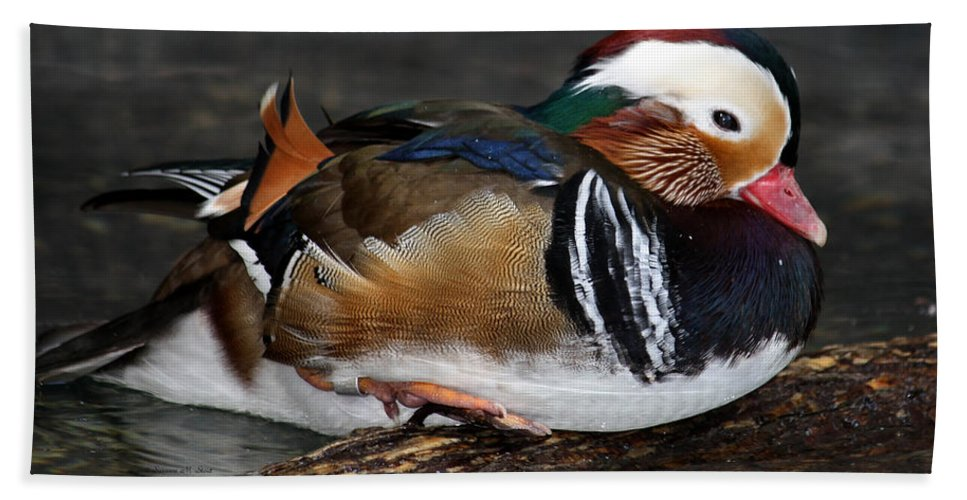 Colorful Plumage Beach Towel featuring the photograph Mandarin Duck by Suzanne Stout