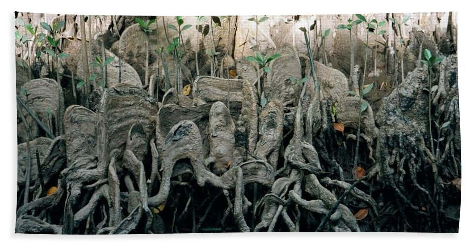 Aerial Roots Beach Towel featuring the photograph Mangrove Aerial Roots by DC Prints