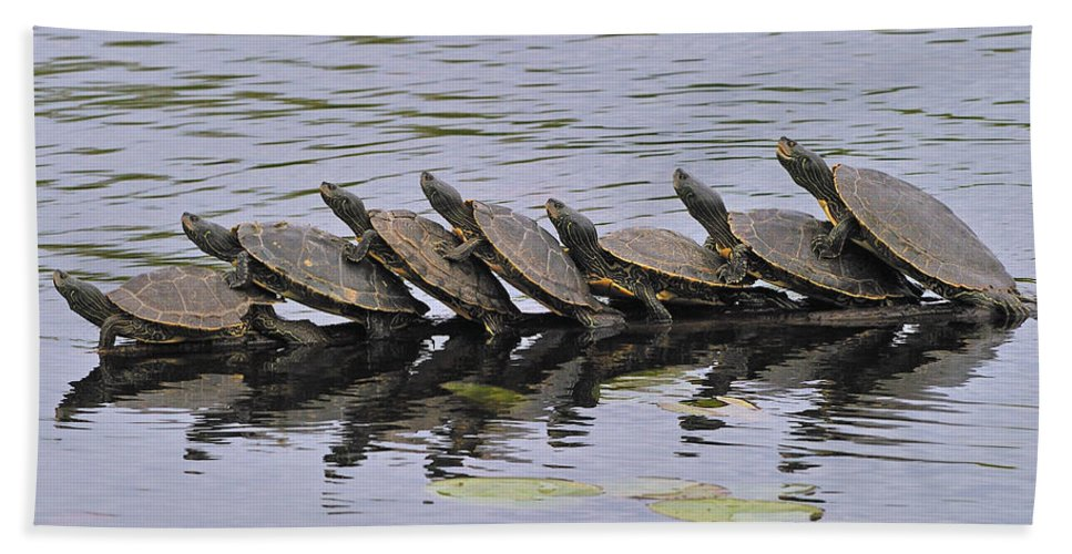 Map Turtles Beach Towel featuring the photograph Map Turtles by Tony Beck