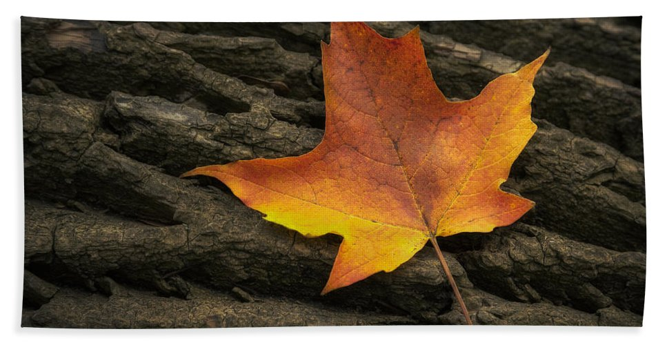 Maple Beach Towel featuring the photograph Maple Leaf by Scott Norris
