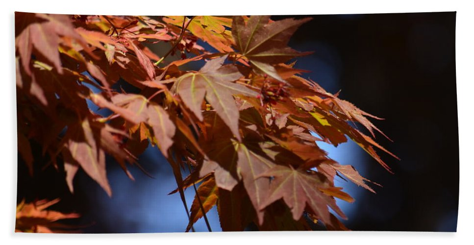 Maples In Spring 2013 Beach Towel featuring the photograph Maples In Spring 2013 by Maria Urso