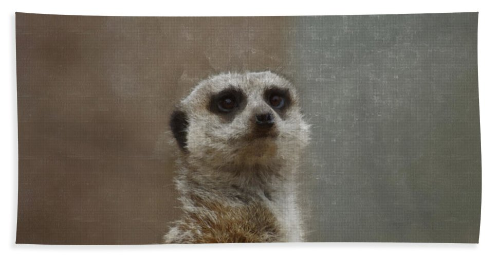 Meerkat Beach Towel featuring the digital art Meerkat 5 by Ernie Echols