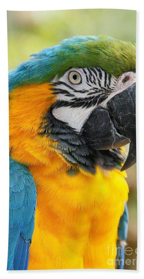 Aloha Beach Towel featuring the photograph Mele E Manono Ia Ea Macao Tropical Birds Of Hawaii by Sharon Mau