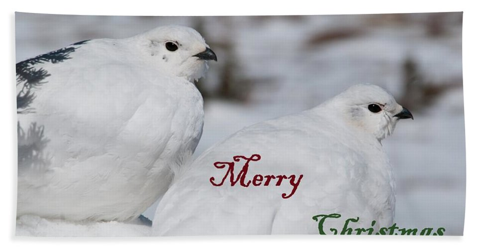 White-tailed Ptarmigan Beach Towel featuring the photograph Merry Christmas - Winter Ptarmigan by Cascade Colors