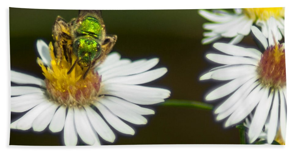 Optical Playground By Mp Ray Beach Towel featuring the photograph Metallic Green Wasp by Optical Playground By MP Ray