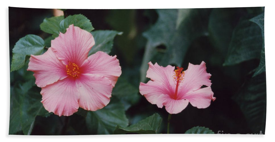 Mexico Beach Towel featuring the photograph Mexico Pink Beauties By Tom Ray by First Star Art
