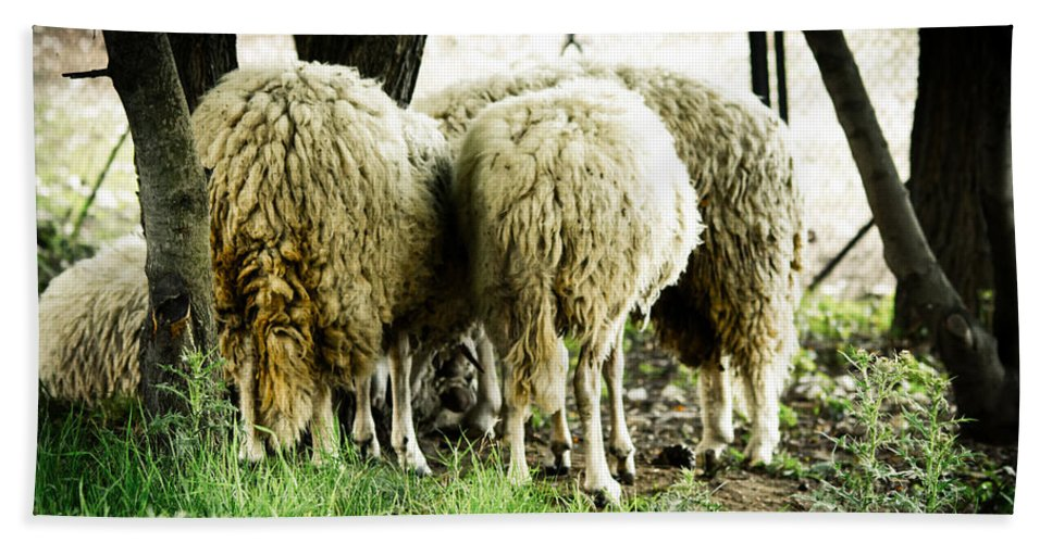 Sheep Beach Towel featuring the photograph Midday Meeting At The Office by Eti Reid