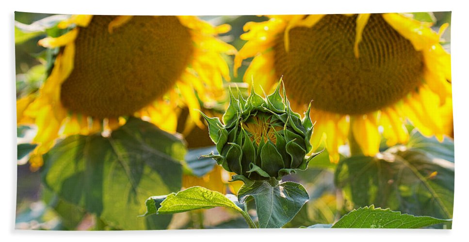 Flowers Beach Towel featuring the photograph Midwives by Jim Garrison