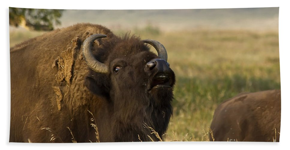 Animal Beach Towel featuring the photograph Mighty Bison by Teresa Zieba