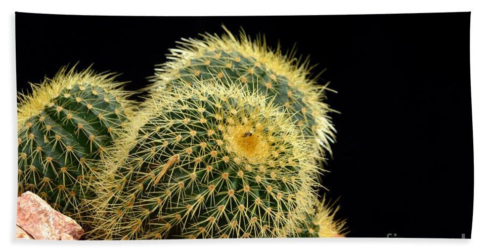 Cactus Beach Towel featuring the photograph Mini Cactus In A Pot by Antoni Halim