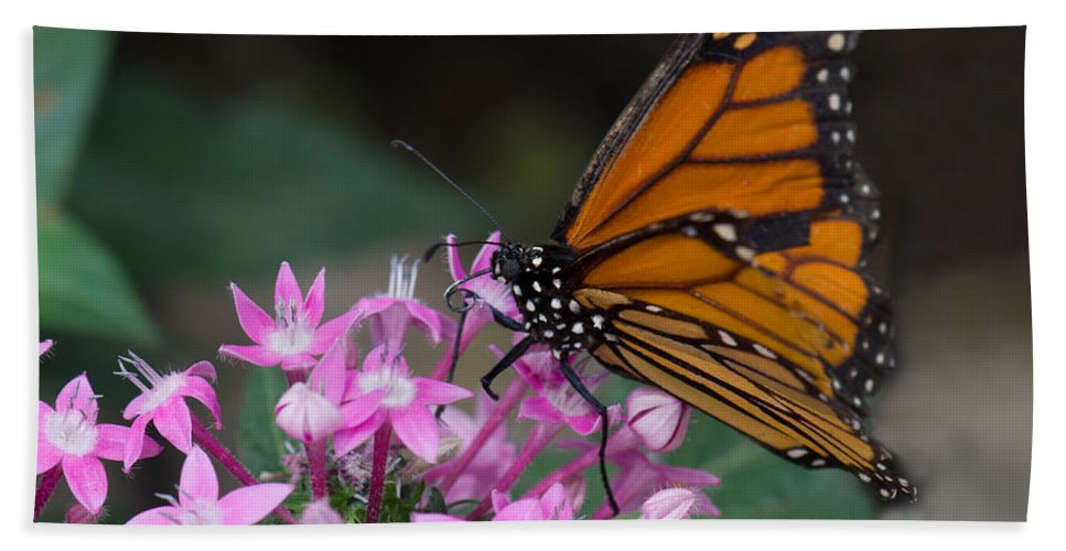 Brookside Gardens Beach Towel featuring the photograph Monarch 2 by Leah Palmer