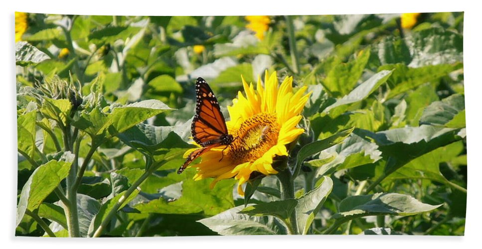 Monarch Beach Towel featuring the photograph Monarch Butterfly And Guest by Kimberly Perry