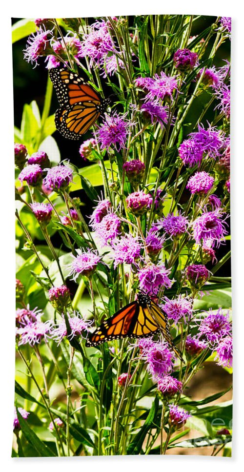 Butterfly Beach Towel featuring the photograph Monarch Butterfly Couple by Ms Judi