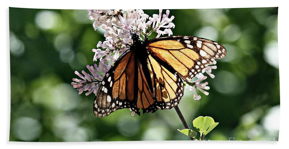 Monarch Butterfly Beach Towel featuring the photograph Monarch Butterfly by Elizabeth Winter