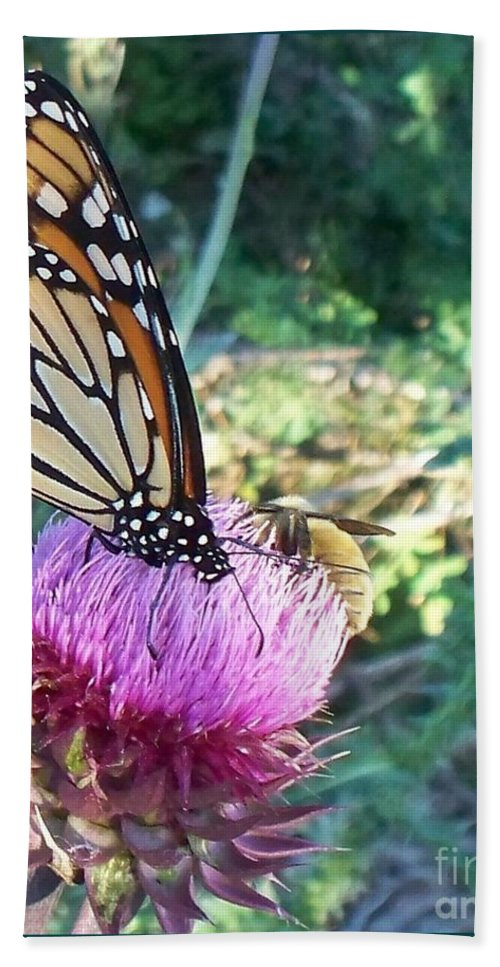 Butterfly Beach Towel featuring the photograph Monarch Butterfly by Eric Schiabor