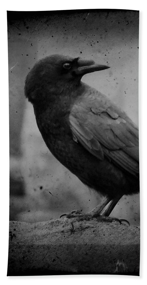 Monochrome Beach Towel featuring the photograph Monochrome Crow by Gothicrow Images