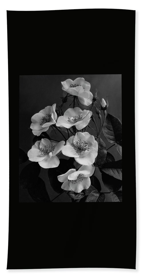 Flowers Beach Towel featuring the photograph Moschata Alba by J. Horace McFarland