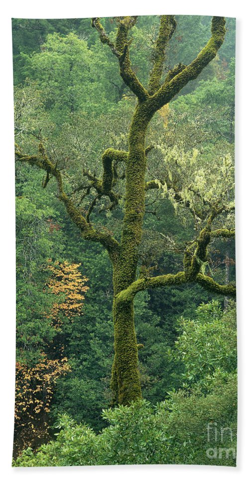 North America Beach Towel featuring the photograph Moss Covered Tree Central California by Dave Welling
