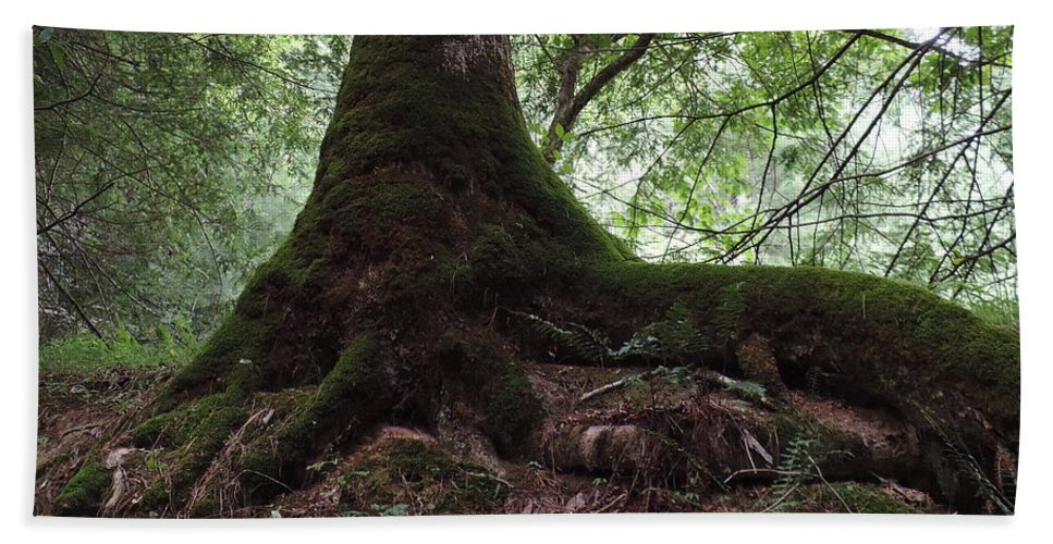 Tree Beach Towel featuring the photograph Mossy Roots by Roe Rader