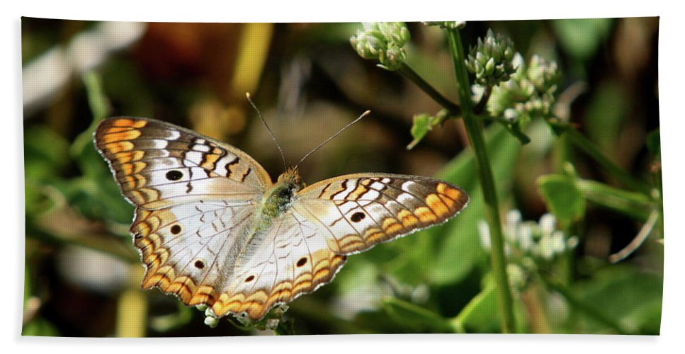 Butterfly Beach Towel featuring the photograph Moth On White Flower by Christiane Schulze Art And Photography