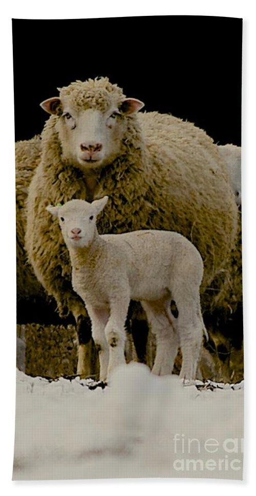 Sheep Beach Towel featuring the photograph Motherhood by Linda Simon