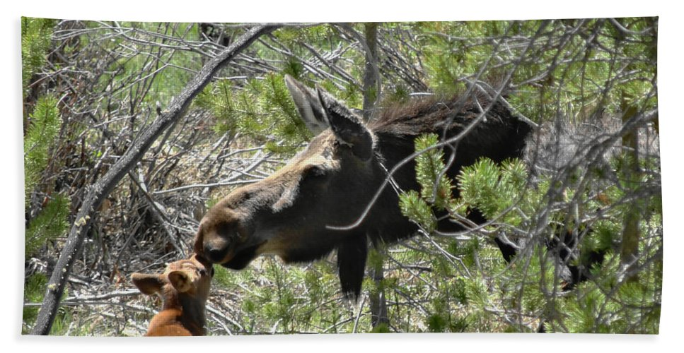 Moose Beach Towel featuring the photograph Motherly Love by Dan Sproul