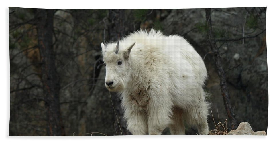Peterson Nature Photography Beach Towel featuring the photograph Mountain Goat Kid by James Peterson