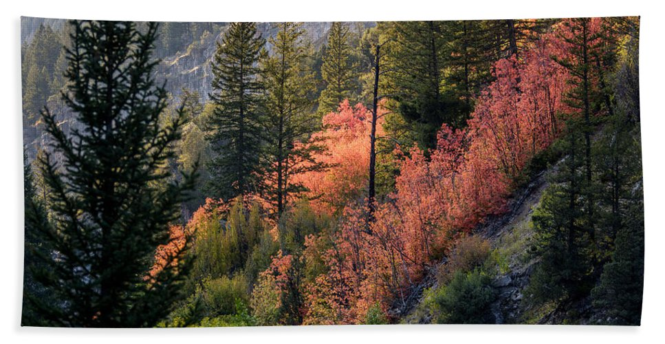 Landscape Beach Towel featuring the photograph Mountain Side Colors by Colleen McIntier