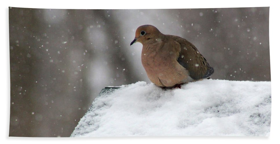 Mourning Dove Beach Towel featuring the photograph Mourning Dove In Snow by Karen Adams