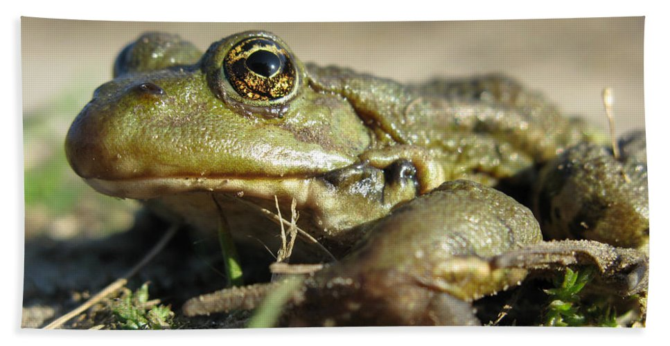 Frog Beach Towel featuring the photograph Mr. Charming Eyes. Side View by Ausra Huntington nee Paulauskaite