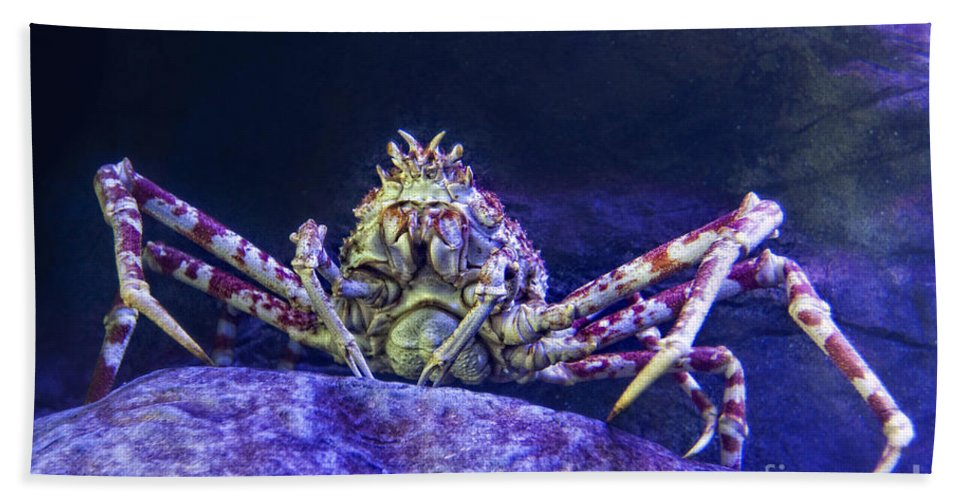 Crab Beach Towel featuring the photograph Mr Crab by Timothy Hacker