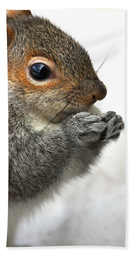 Squirrel Beach Towel featuring the photograph Munching by Karol Livote