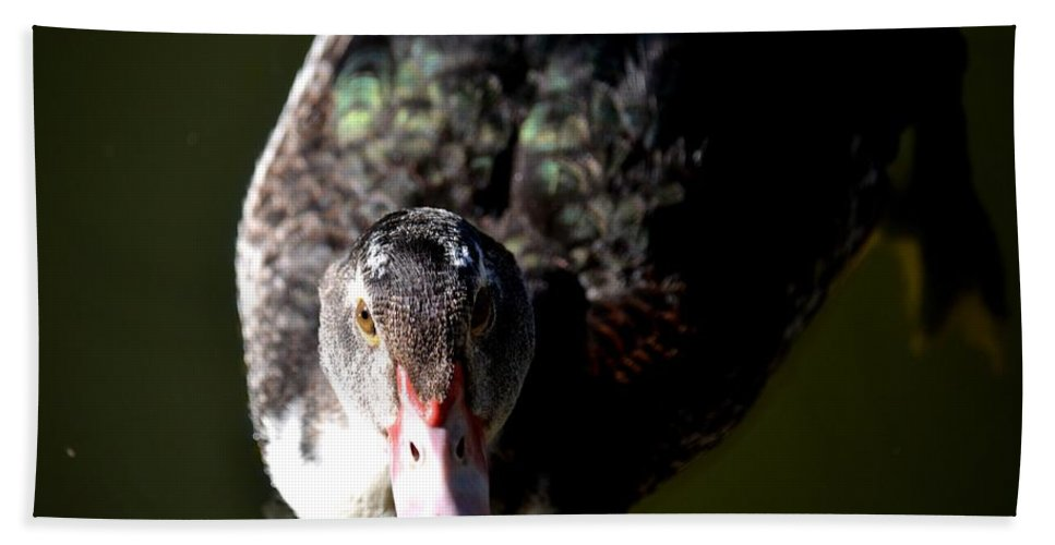 Muscovy 14-2 Beach Towel featuring the photograph Muscovy 14-2 by Maria Urso