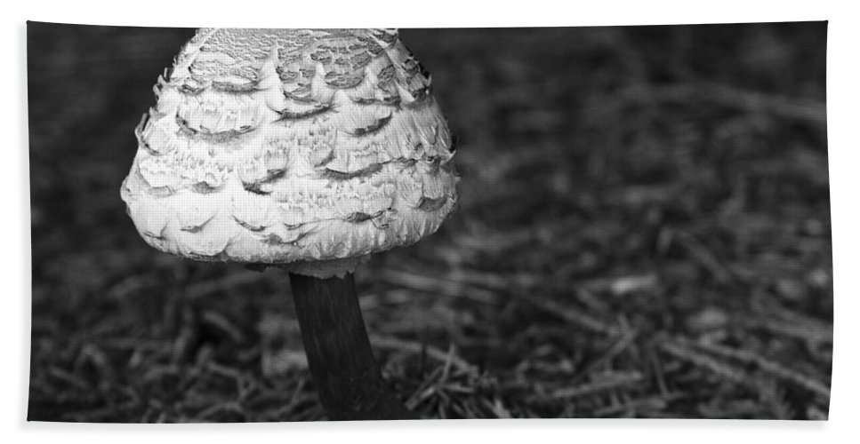 3scape Photos Beach Towel featuring the photograph Mushroom by Adam Romanowicz