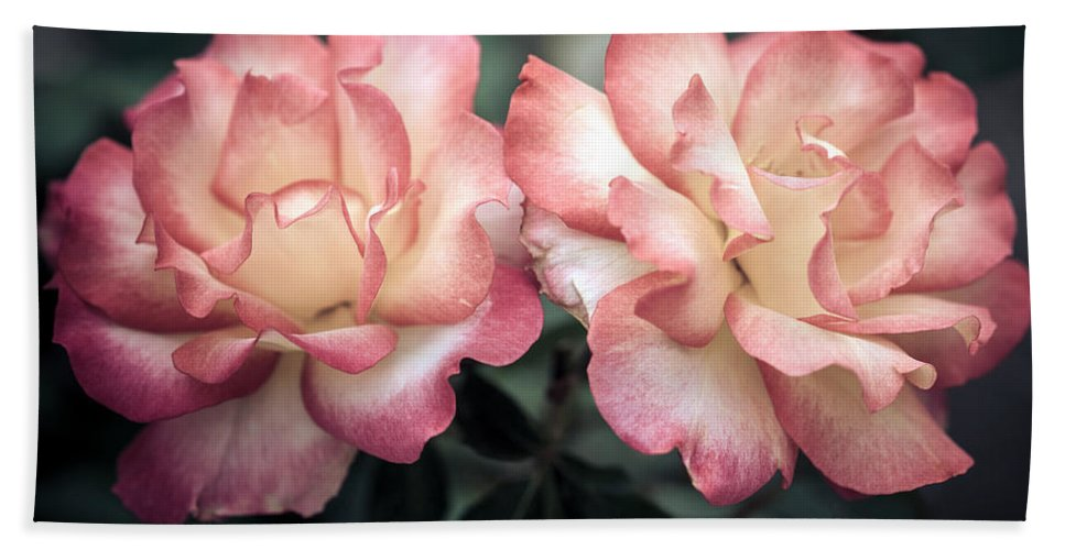 Bumble Bee Beach Towel featuring the photograph Muted Pink Roses by Sennie Pierson