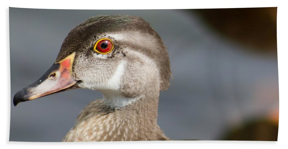 Wood Duck Beach Towel featuring the photograph My Feather Friend - Wood Duck by Nikki Vig