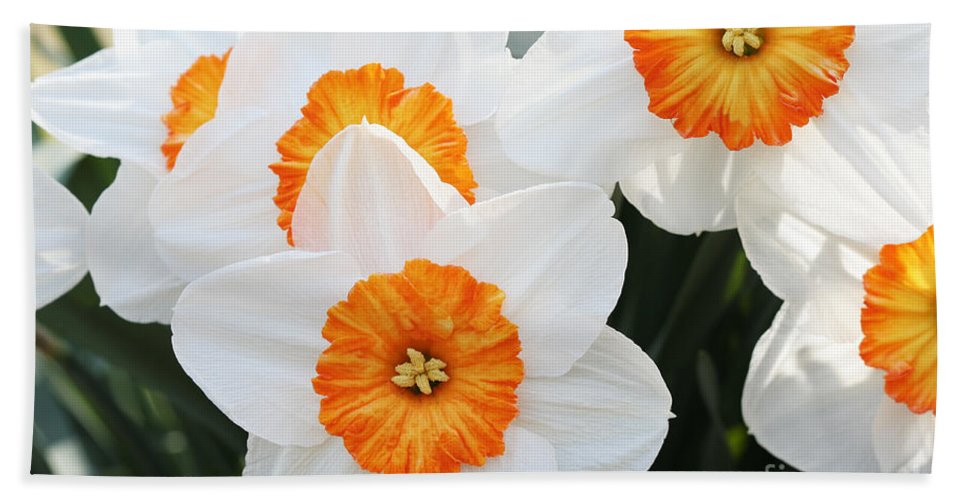 Narcissus Parkdene Beach Towel featuring the photograph Narcissus Parkdene #2 by Judy Whitton