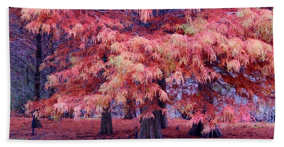 Fall Beach Towel featuring the photograph Nature Colors by Cynthia Guinn