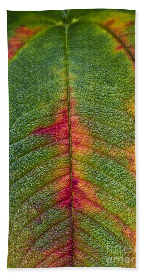 Leaf Beach Towel featuring the photograph Natures Ornaments by Heiko Koehrer-Wagner