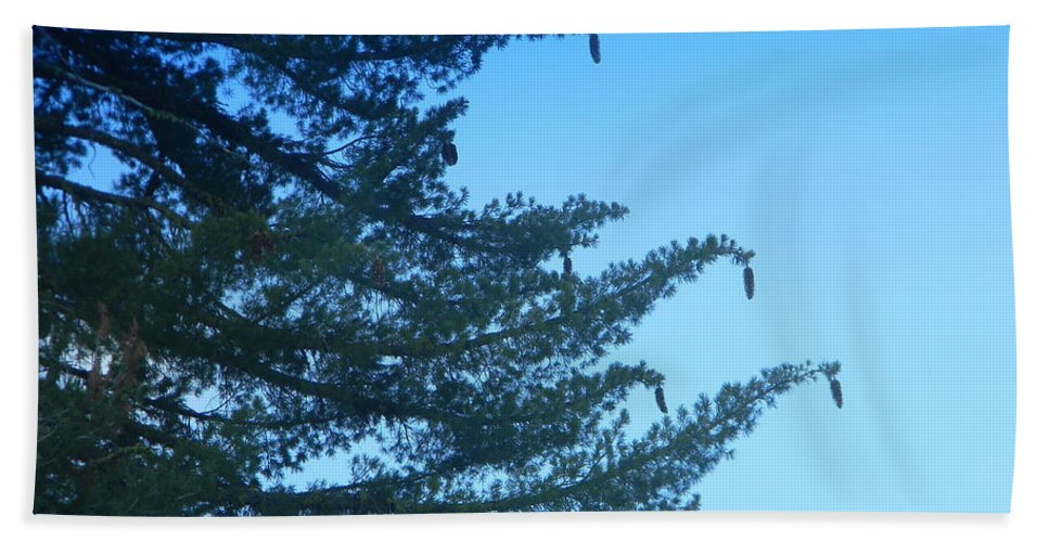 Pine Cones Beach Towel featuring the photograph Natures Ornaments by Sara Gravely- Comstock